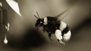 Bee Maker